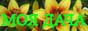 МОЯ ДАЧА - Саженцы многолетних растений